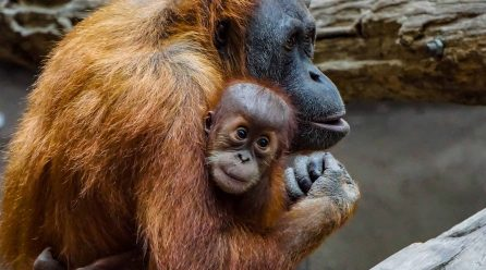 Looking for a Beelik in Borneo?